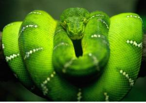 Obama Global Warming/ Climate Change/ Cap & Trade - not all green is good/ snake